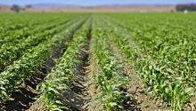 Farm and Ag Land