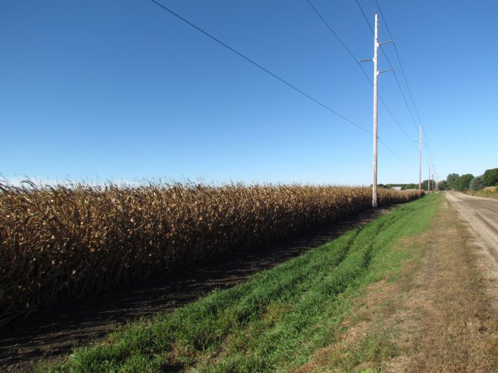 Land Auction 61.19 High Quality Acres near Brown's Lake, West of Salix, Iowa
